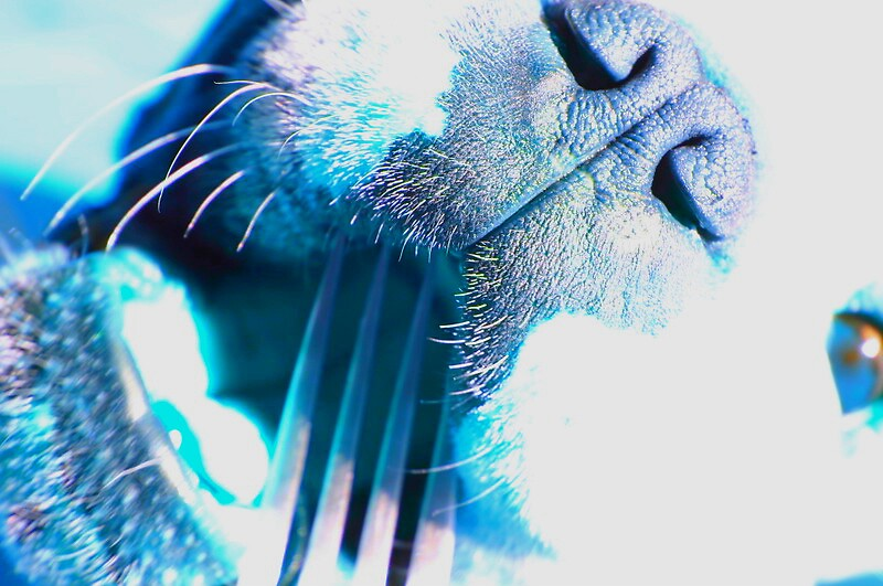 Feeling blue... by disorder