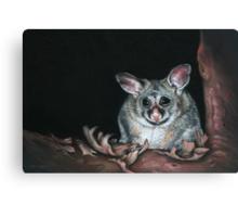 Red Gum Renegade  Canvas Print