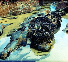 Rockpool by mikepom