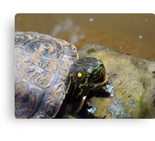 The cheating Turtle Canvas Print