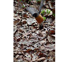 Central Park Bird Photographic Print