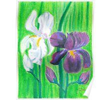 Iris -oilpastels  Poster