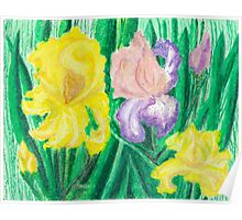 Iris - oil pastels Poster