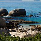 More African Penguins by georgyman
