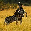 Fighting Stallions by Leon Rossouw