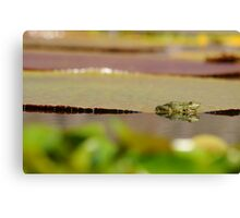 frogs paradies Canvas Print