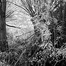 Tanglewood by Ann Garrett