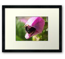 As Snug As A Bug In A Rug Framed Print