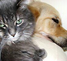 Shared Pillow by PPPhotoArt