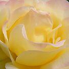 Soft and creamy by Yool