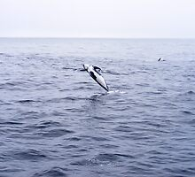 Leap Of Faith!!! by KristaLynn1807