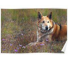 Nature Dog Poster