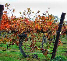 Autumn vines by Jenni Tanner
