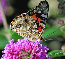 She's A Lady by Kate Adams