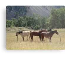 Outfitter's string Metal Print