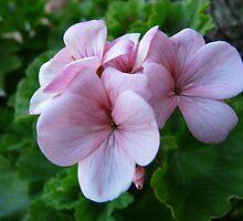 bloomin' by exhethia