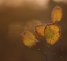 Backlit rule of thirds by Normcar
