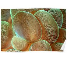 Anemone Abstract Poster