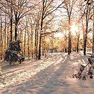 GOLDEN WINTER MORN 1 by NatureGreeting Cards ©ccwri