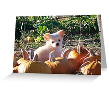 Pumpkin Puppy Greeting Card
