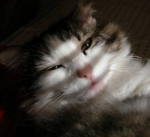 Purrfect Kitty Waking up by toots