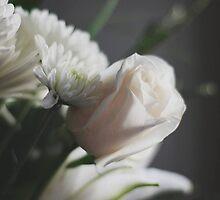 Soft Rose by shutterbugdani