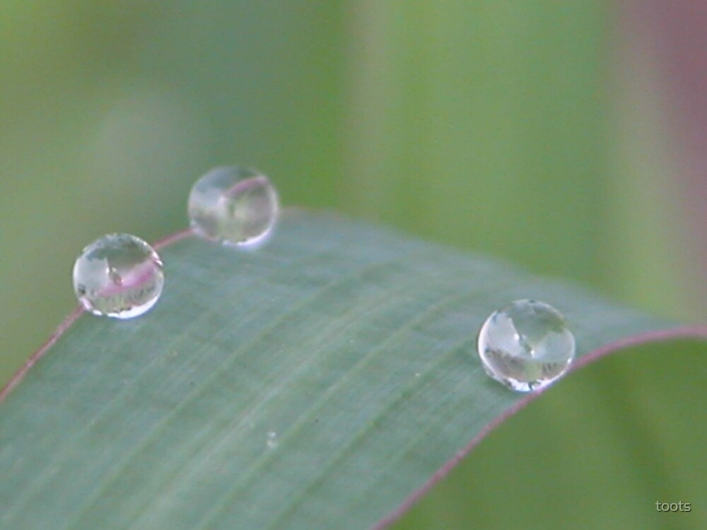 Drops of rain by toots