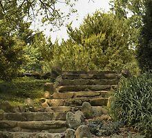 STONE STEPS by susan Lipschutz