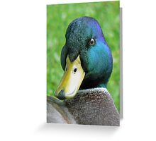 A Mallard Drake Greeting Card
