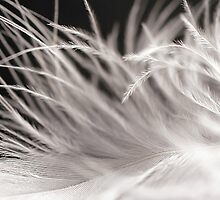 Feather Soft by Donell Trostrud