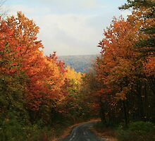 Fall in Pennsylvania - Greenland Road by Lori Deiter