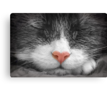 Color my black and white dreams Canvas Print