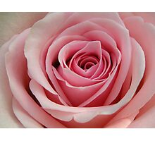 Pink Swirls Photographic Print