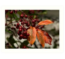 Fall in Pennsylvania - Berries & Leaves Art Print