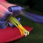 Bromeliad macro by Michael Matthews