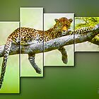 Leopards Perch by Peter Stratton