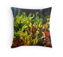 Croton Petra Throw Pillow