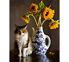Feline Finesse Photographic Print