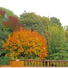 Autumn by Andrew Price