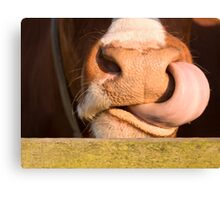 Wild cows Canvas Print
