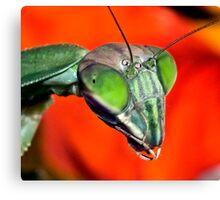 Mantis (6) ! Canvas Print