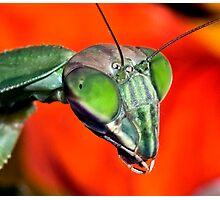 Mantis (6) ! Photographic Print