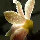 Lemon Blossom by HippyDi