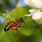Bee in Flight by Greg Carlill