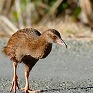 A Busy Weka - NZ by AndreaEL