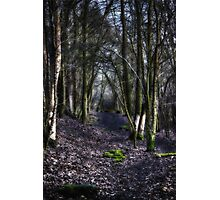Lost in the Forest Photographic Print