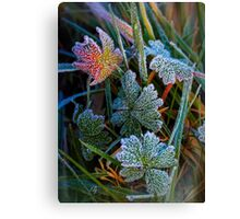 With Icing Canvas Print