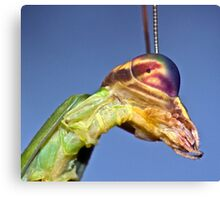 Mantis Profile ! Canvas Print