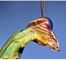 Mantis Profile ! Photographic Print
