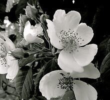 Flowers in  Mono by Jane  mcainsh